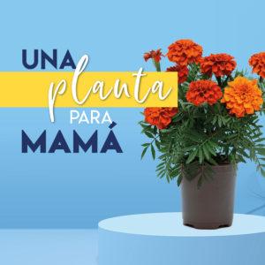 Aluche_flores dia de la madre_destacado noticias